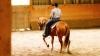 Reining: Ansatz Rückwärtsichten vor dem Spin